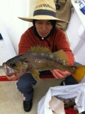 070211 yellowtail