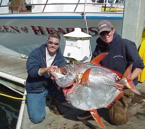 Check out the 58 pound opah landed while albacore fishing on Monday, September 11, 2006...pretty cool looking fish, huh?!