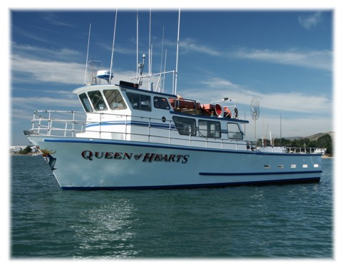 queen of hearts sportfishing captain bob ingles pillar point fishing boat 480x376
